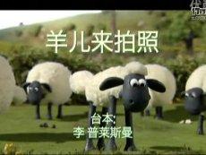 19 羊儿来拍照 标清