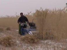 意大利芦苇割捆机在黑龙江吉林等地冬季收获作业