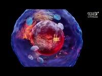 HTC VIVE推出用于展示诺贝尔医学奖成果的VR体验